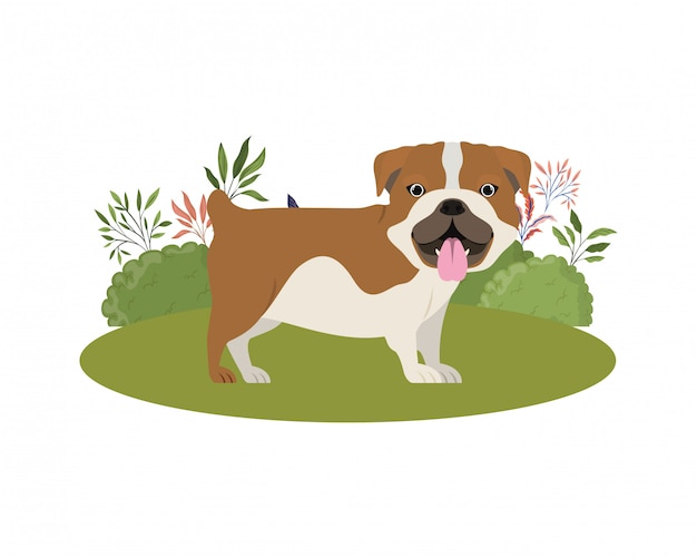 Inglês bulldog bonito cachorro em branco