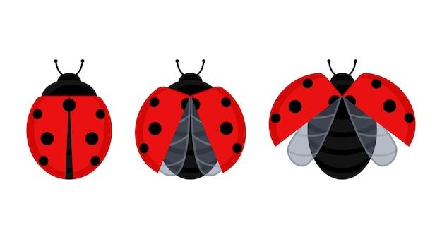 Inseto de besouro joaninha vermelho bonito definido em uma folha ou voando.