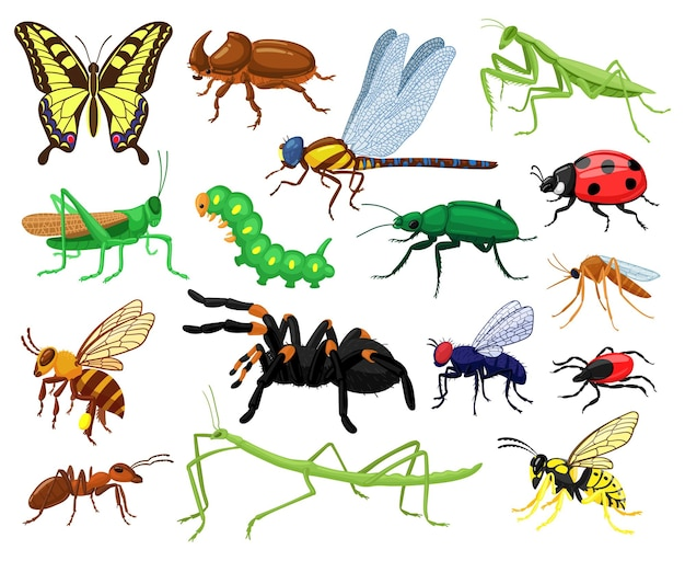 Insetos de desenhos animados. borboleta, besouro, aranha, joaninha e lagarta, insetos de entomologia da floresta selvagem. conjunto de insetos de vida selvagem bonito da natureza. gafanhoto e borboleta, inseto libélula