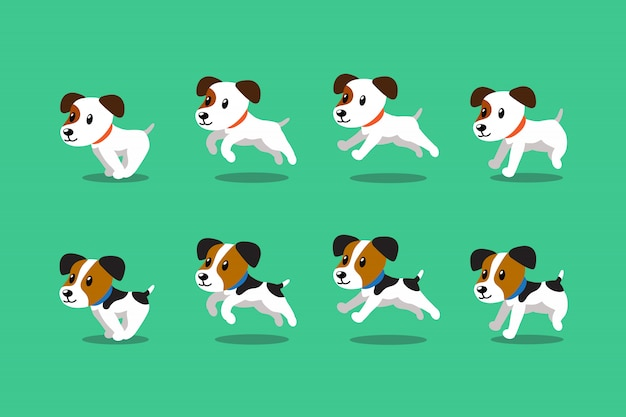 Jack russell terrier cachorros correndo passo