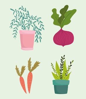 Jardinagem, ícones de cenouras em vasos de beterraba