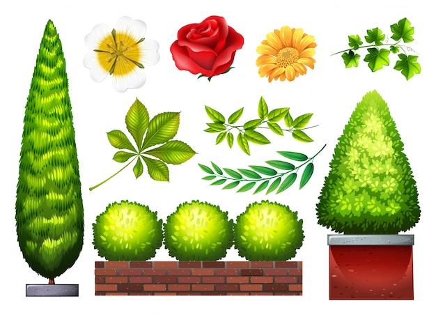 Jardinando plantas e flores em vários tipos