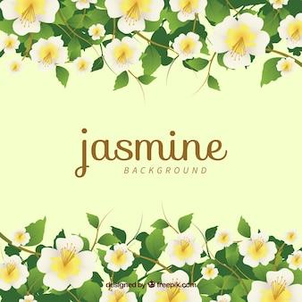 Jasmine flores com estilo moderno