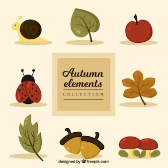 Joaninha com outros elementos do outono