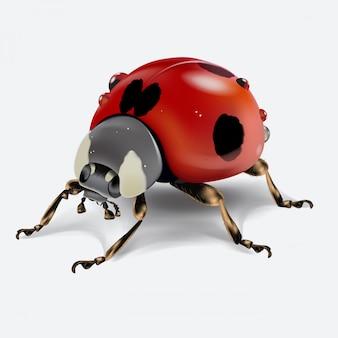 Joaninha realictic isolada no fundo branco. imagem macro de um inseto. ilustração