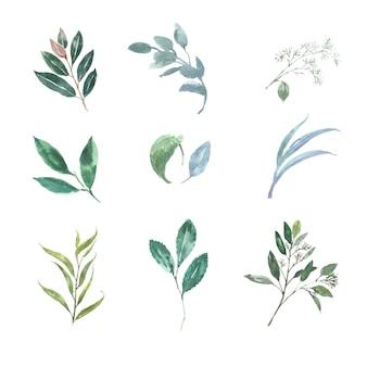 Jogo das várias folhas da aquarela, ilustração dos elementos isolados no branco.
