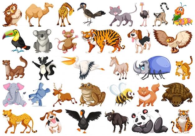 Jogo, de, animal selvagem