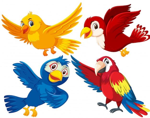 Jogo, de, diferente, pássaros
