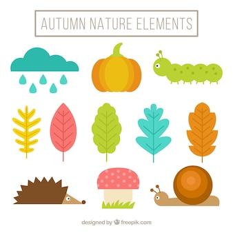 Jogo de elementos naturais do outono