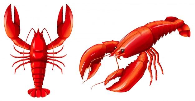 Jogo, de, lagosta vermelha