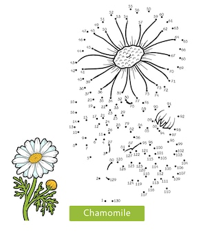 Jogo de números, jogo de educação ponto a ponto para crianças, flor de camomila