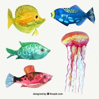 Jogo de peixes da aguarela e medusas