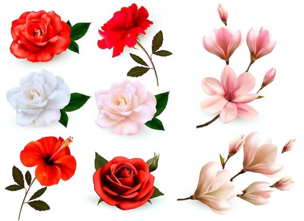 Jogo do flores bonitas isoladas em um fundo branco.