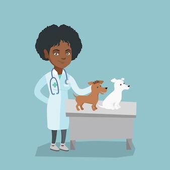 Jovem, africano-americano, veterinário, examinando, cachorros