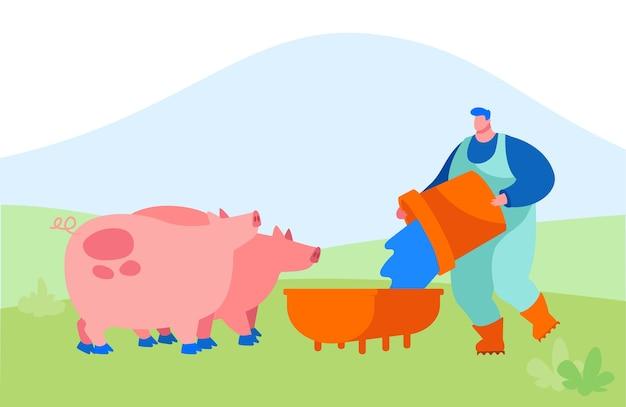 Jovem alimentando porcos, colocando grãos no cocho
