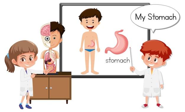 Jovem médico explicando a anatomia do estômago
