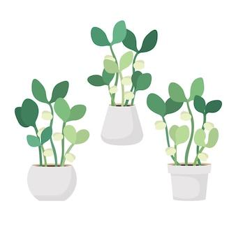 Jovens brotos verdes frescos em vasos brancos ilustração em vetor