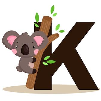 K para koala