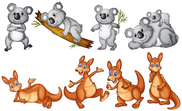 Koalas e cangurus em branco