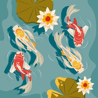 Koi fishes airview