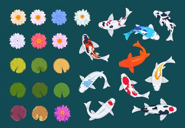 Koi peixe e lótus. carpa japonesa, flores e folhas de nenúfares.