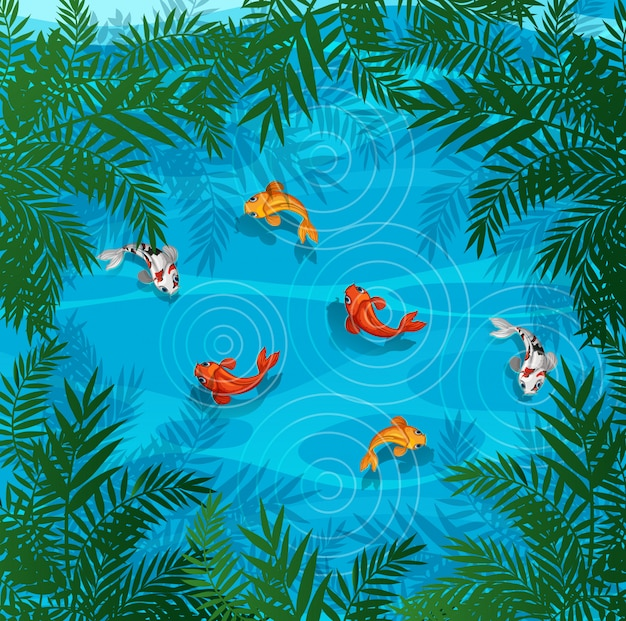 Koi peixe em uma lagoa