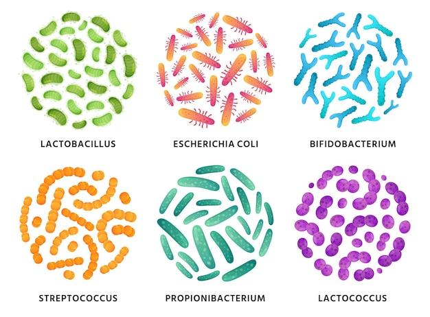 Lactobacillus, bifidobacterium e bactérias probióticas lactococcus em círculo. bom conjunto de ilustração de bactérias.