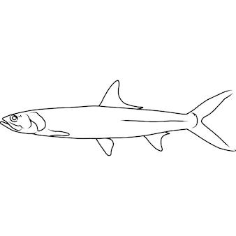 Ladyfish mão desenhada clipart vetorial desenhada