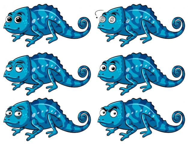 Lagarto azul com seis emoções diferentes