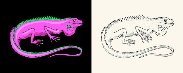 Lagarto iguana verde americano ou répteis exóticos animais selvagens gravados na natureza desenhados à mão