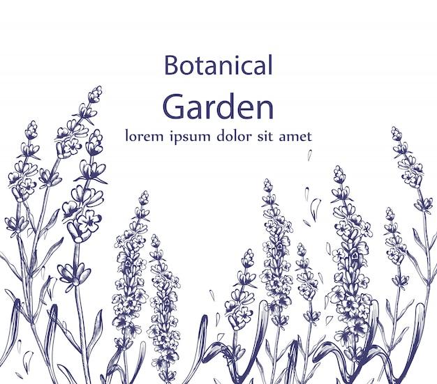 Lavender card vintage line art floral decor