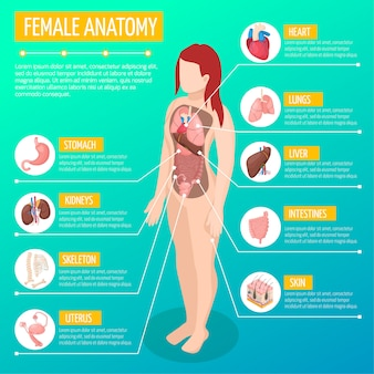 Layout de infográfico de anatomia mulher com localização e definições de órgãos internos no corpo feminino isométrico