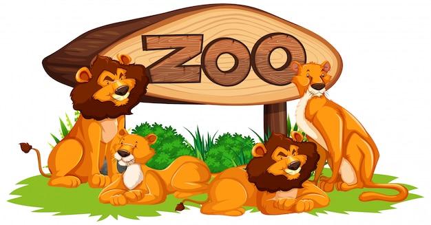 Leão com sinal de zoológico