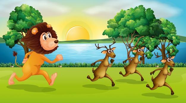 Leão e veados correndo no parque
