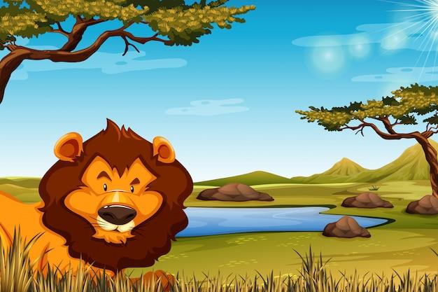 Leão na cena da paisagem africana