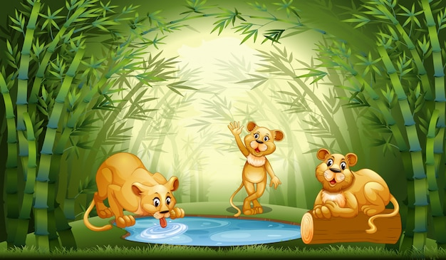 Leão na floresta de bambu