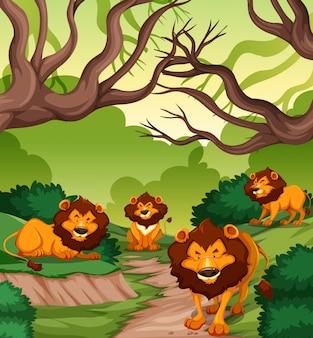 Leão na floresta