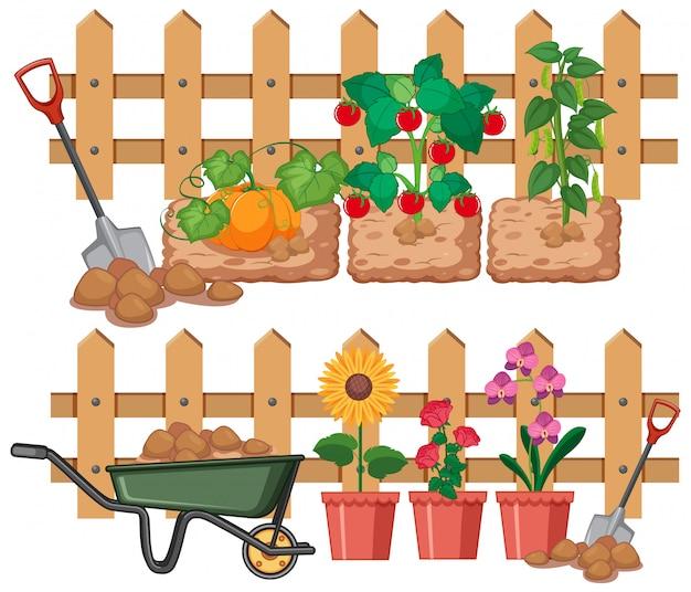 Legumes e flores que crescem no jardim