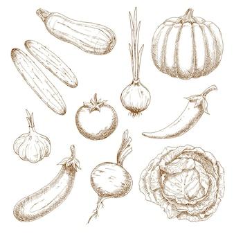 Legumes esboçam ícones para o antigo livro de receitas ou design de menu