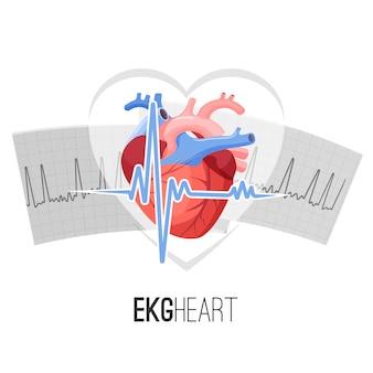Leituras de ekg em papel e emblema de promo de coração humano.