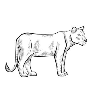 Leoa isolada no fundo branco. esboce o predador gráfico da savana em estilo de gravura. projete desenho retro preto e branco. ilustração vetorial. Vetor Premium