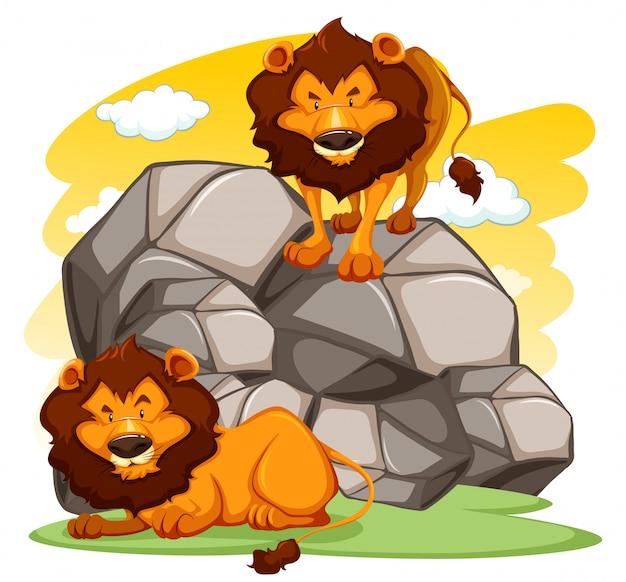 Leões cartum ilustração