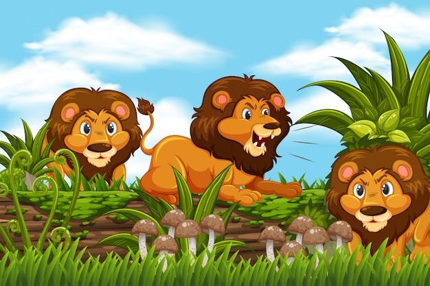 Leões na cena da selva