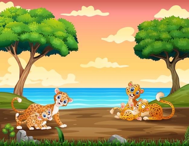 Leopardo dos desenhos animados, brincando com seu filhote no zoológico