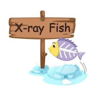 Letra do alfabeto animal x para peixe de raio-x