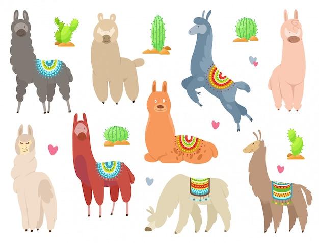 Lhamas e alpacas bonitinha. animais sorridentes engraçados isolados no branco.