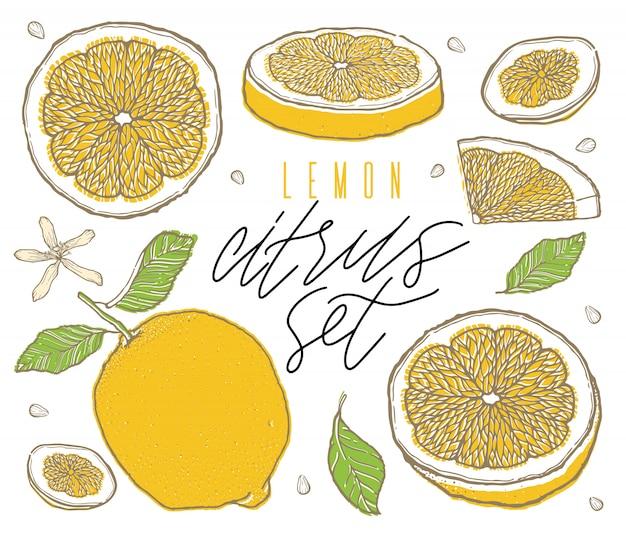 Limões da fruta ajustados colorfull tirado mão do esboço.