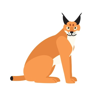Lince ou lince isolado no fundo branco. impressionante animal predador exótico com pelagem peluda. mamífero carnívoro lindo. gato selvagem ou felino. ilustração vetorial colorida em estilo cartoon plana.