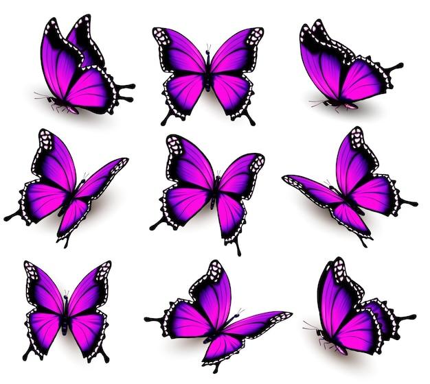 Linda borboleta rosa em diferentes posições. vetor.