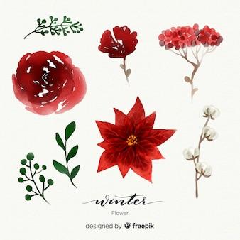 Linda coleção aquarela flor de inverno